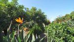 casa-el-jardin-ferienhaus-la-palma-reise-202