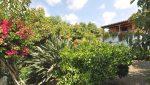 casa-el-jardin-ferienhaus-la-palma-reise-250
